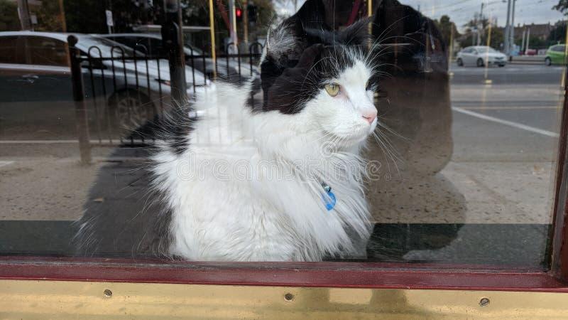 Kat in venster royalty-vrije stock afbeeldingen