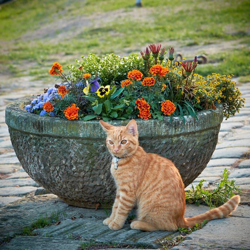 Kat voor een bloempot royalty-vrije stock fotografie