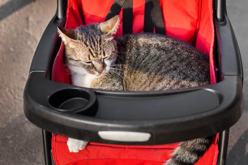 Kat in wandelwagen op een reis stock afbeeldingen