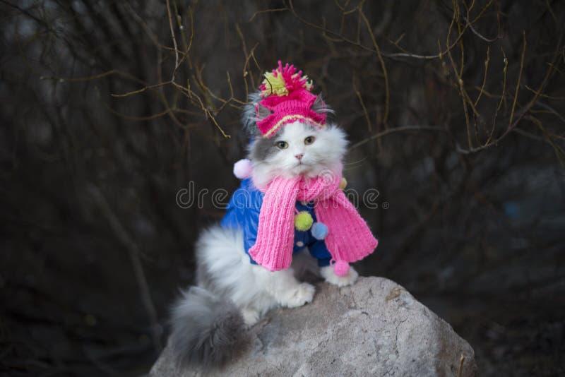 Kat in warme kleren die op de lente wachten stock afbeelding