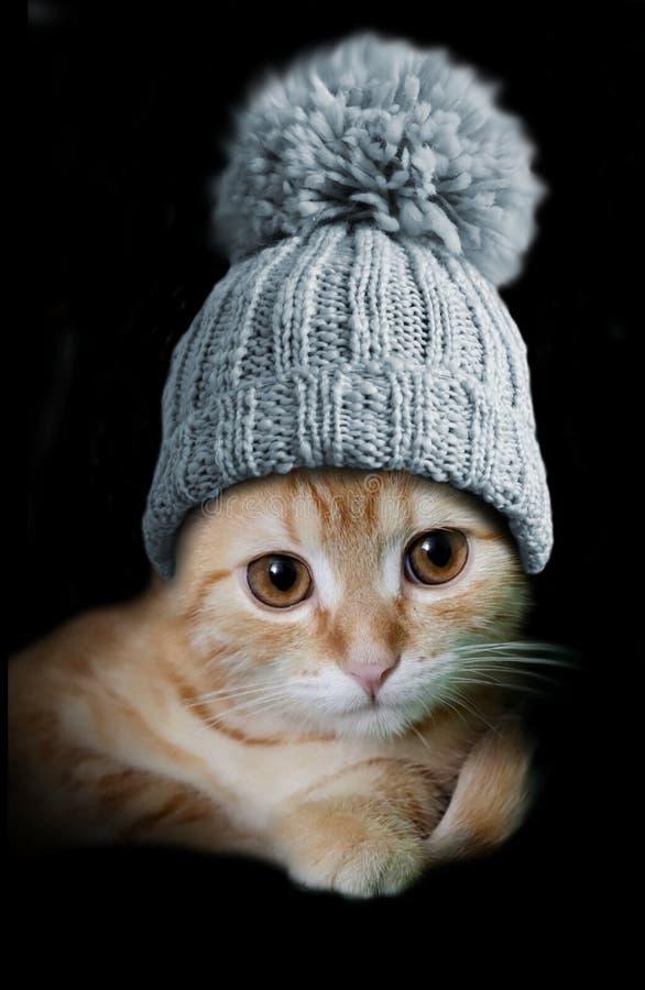 Kat in wollen hoed stock fotografie