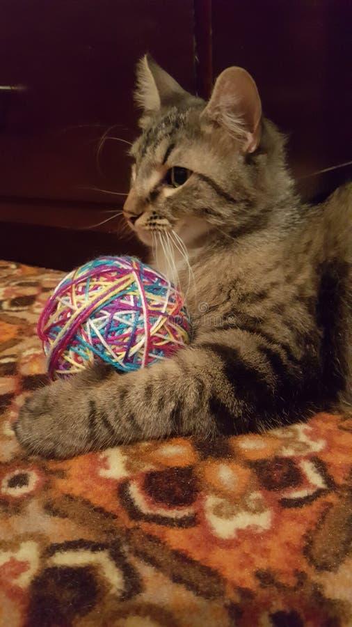 Kat & zijn bal royalty-vrije stock foto