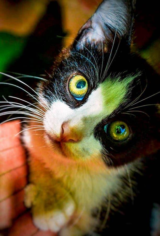 Kat in zwarte stock afbeelding
