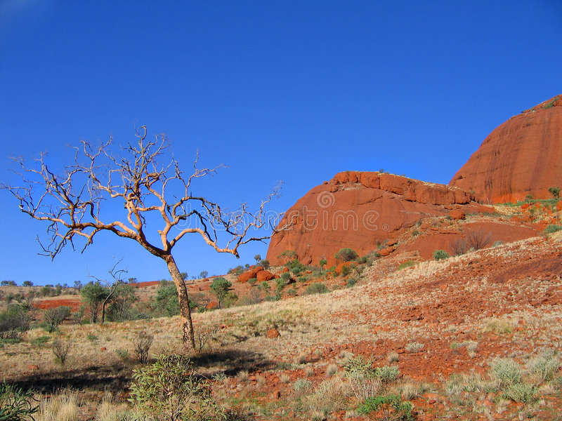 Kata Tjuta landscape stock photos