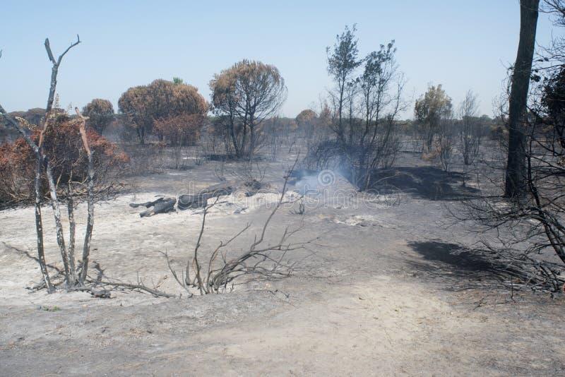 Katastrofalni skutki podpalenie Swój oblewać w lesie i zdjęcie royalty free