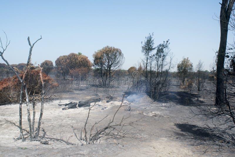 Katastrofalni skutki podpalenie Swój oblewać w lesie i obraz royalty free