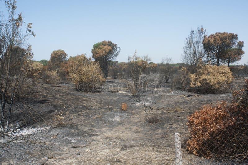 Katastrofalni skutki podpalenie Swój oblewać w lesie i fotografia royalty free