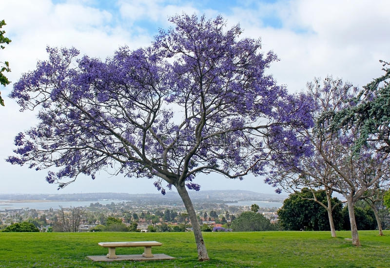 Kate Sessions Park, San Diego photo stock