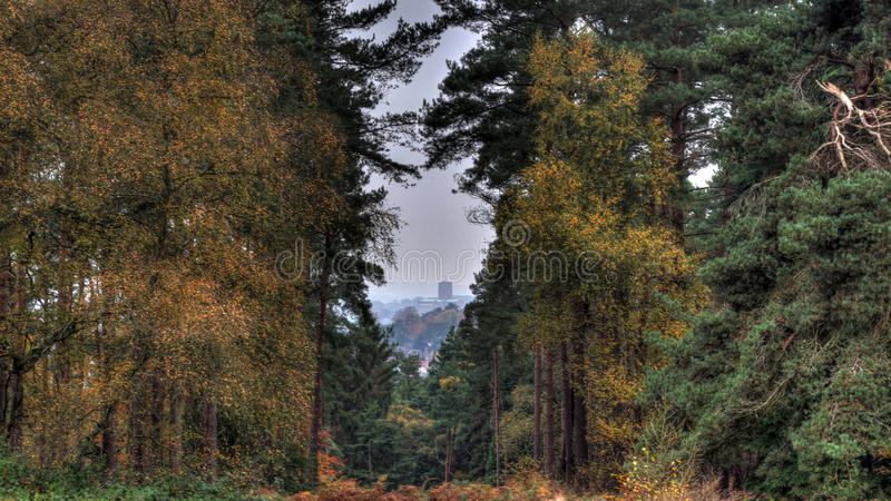 Katedra przez drzew w jesieni zdjęcie stock