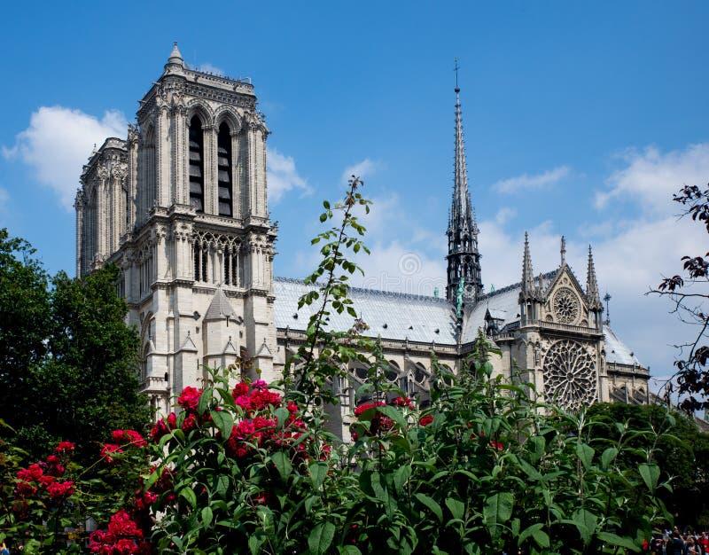 katedralny notre dame Paryża zdjęcia royalty free