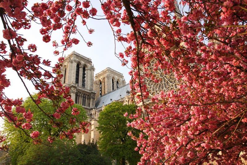 katedralny paniusi notre Paris wiosna czas obrazy royalty free
