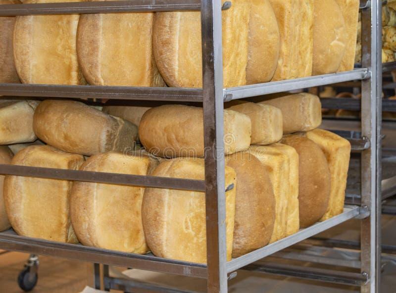 Kategorie kłama na półce w supermarkecie gorący crispy chlebowi bochenki, piekarnia, tło świeży chleb fotografia stock