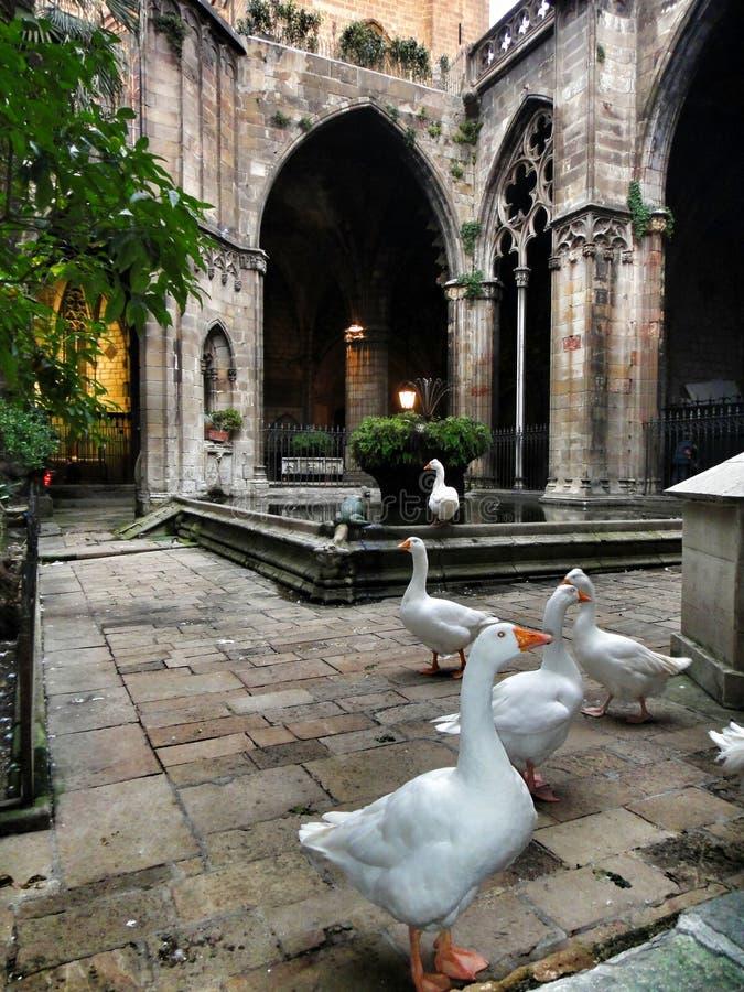 Kathedraal in Barcelona royalty-vrije stock afbeelding
