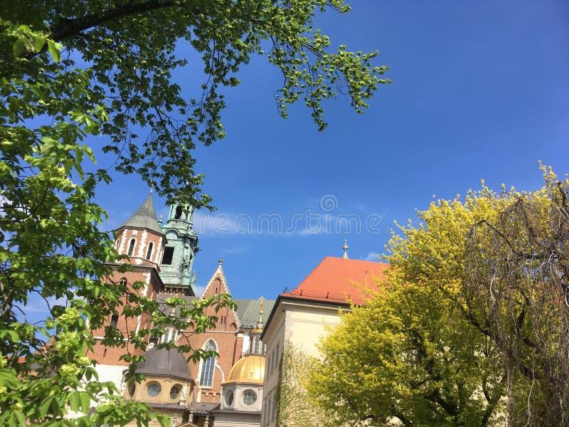 Kathedraal door de bomen royalty-vrije stock afbeelding