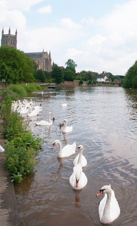 Kathedraal en zwanen stock foto's