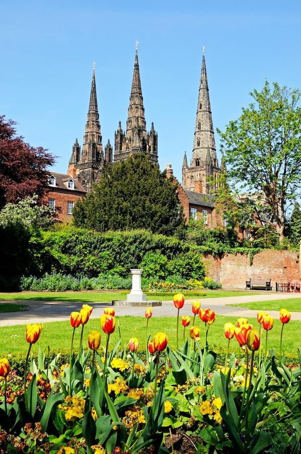 Kathedrale und Tulpen, Lichfield stockfotografie