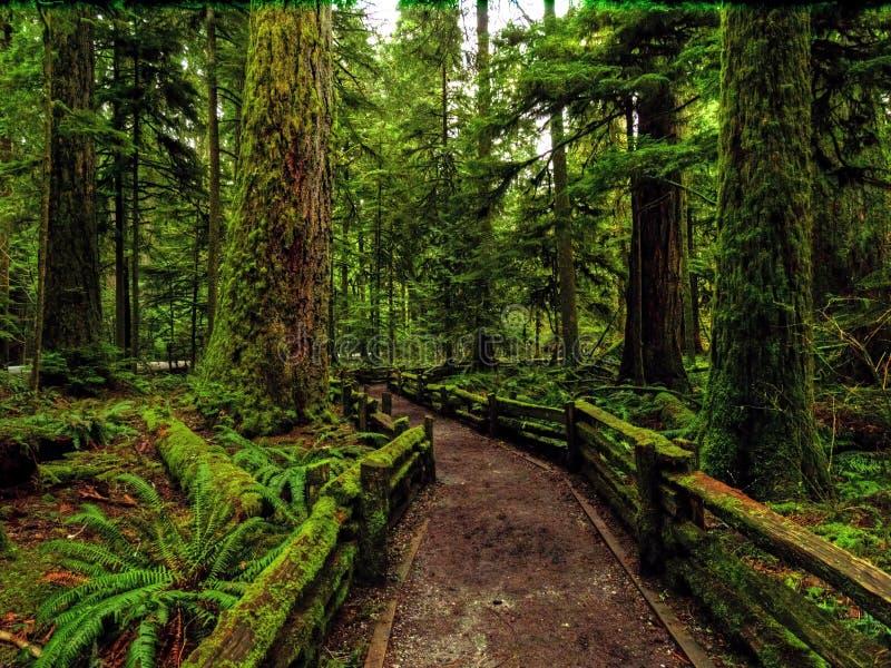 Kathedralenwaldung, Vancouver Island lizenzfreies stockbild