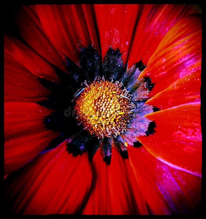 Kathies blommor 2 royaltyfria foton
