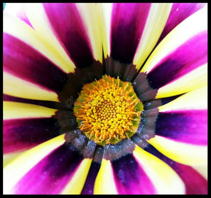 Kathies blommor 1 royaltyfria bilder