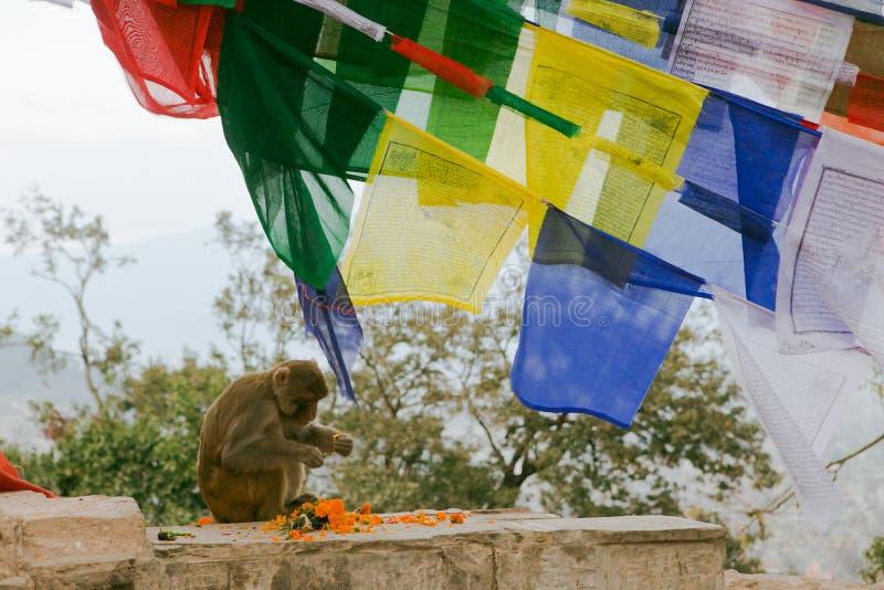 Kathmandu Nepal, Dec, - 31, 2016: Smoll małpa fotografia stock