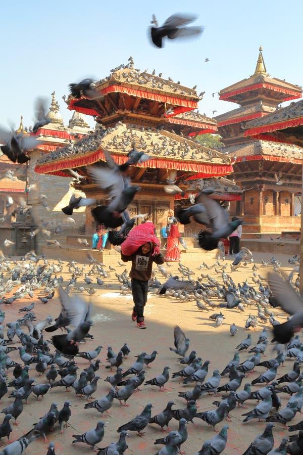 KATHMANDU, NEPAL - JANUARY 14, 2015: Pigeons flocking in large numbers on Durbar Square. Pigeons flocking in large numbers on Durbar Square stock image