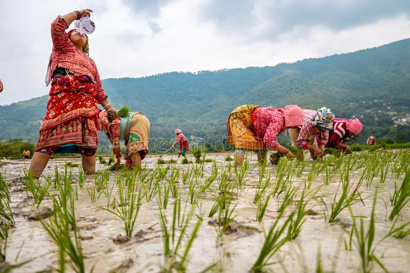 Asian Farmers Returning Home Editorial Photo - Image of farming
