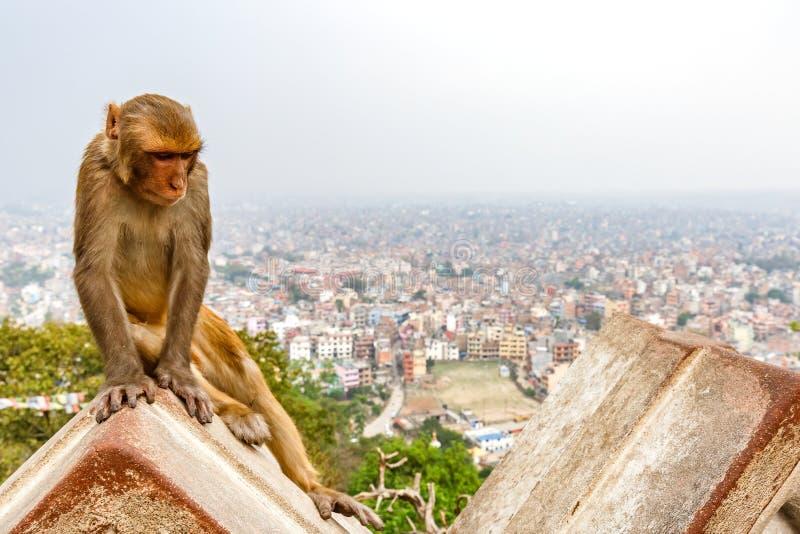 Kathmandu pejzaż miejski i rhesus małpa fotografia stock