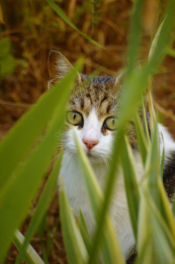 Katje achter bladeren royalty-vrije stock fotografie