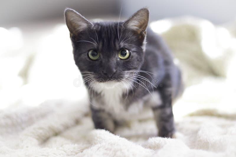 Katje beschikbaar voor goedkeuring op een bed stock afbeelding