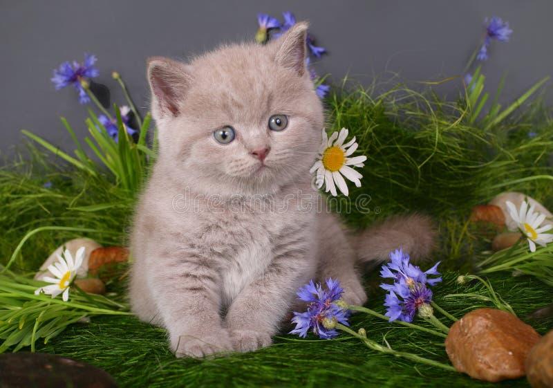 Katje in bloemen stock foto