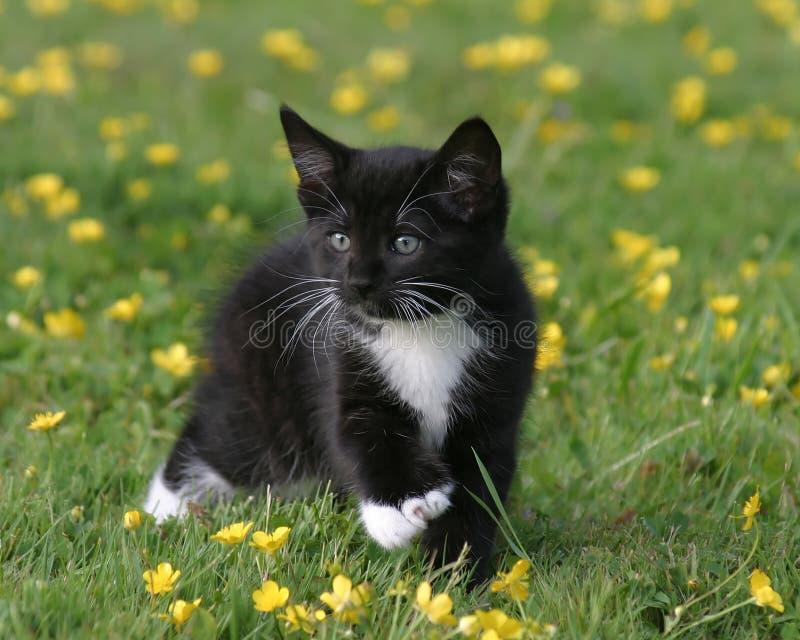 Katje in Boterbloemen stock afbeelding