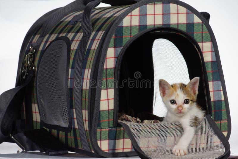 Katje in comfortabel huisbed stock fotografie