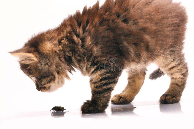 Katje dat een insect onderzoekt royalty-vrije stock afbeeldingen