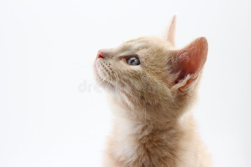 Katje dat omhoog eruit ziet stock afbeeldingen