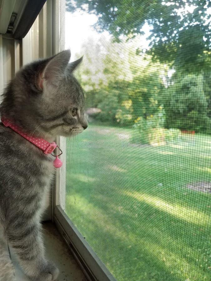 Katje dat uit venster kijkt stock foto's
