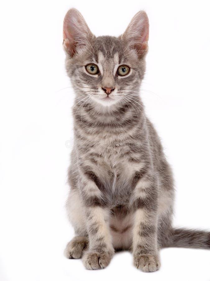 Katje dat zich op een vloer bevindt royalty-vrije stock afbeeldingen