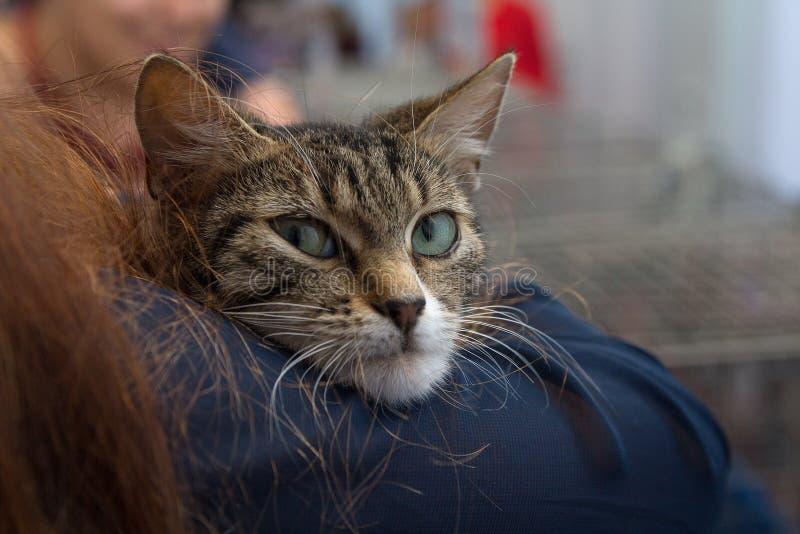 Katje in de handen van een vrijwilliger in een schuilplaats voor dakloze dieren royalty-vrije stock fotografie