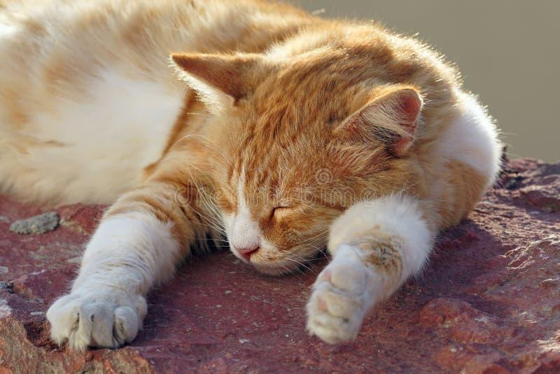 Katje die in de zon in Oia rusten royalty-vrije stock afbeeldingen