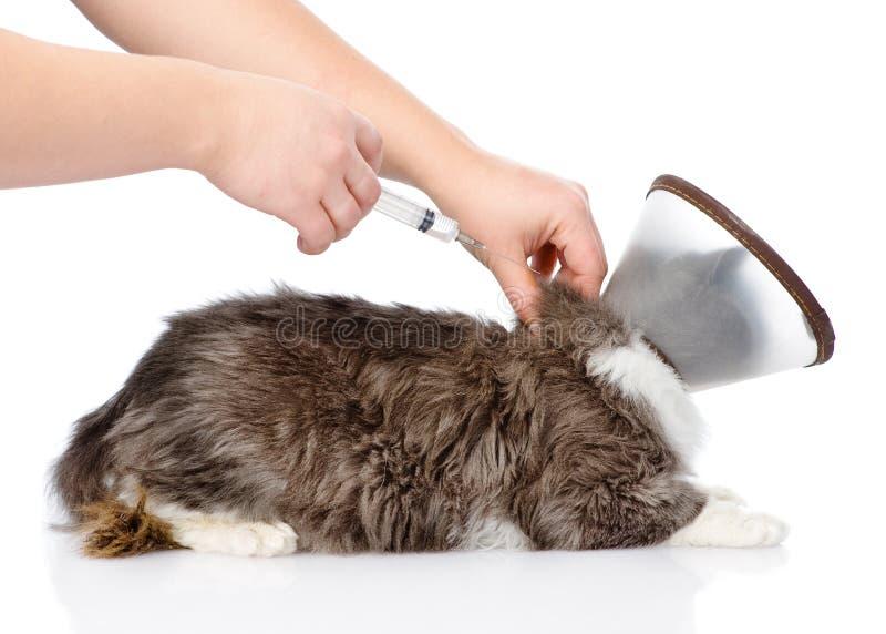 Katje die een vaccin krijgen bij de veterinaire kliniek Geïsoleerd op wit royalty-vrije stock afbeeldingen