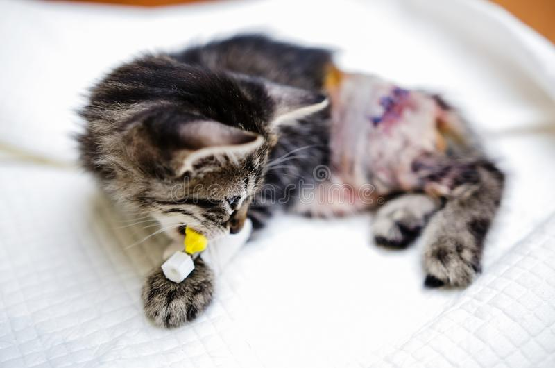 Katje die na surgeory terugkrijgen stock foto