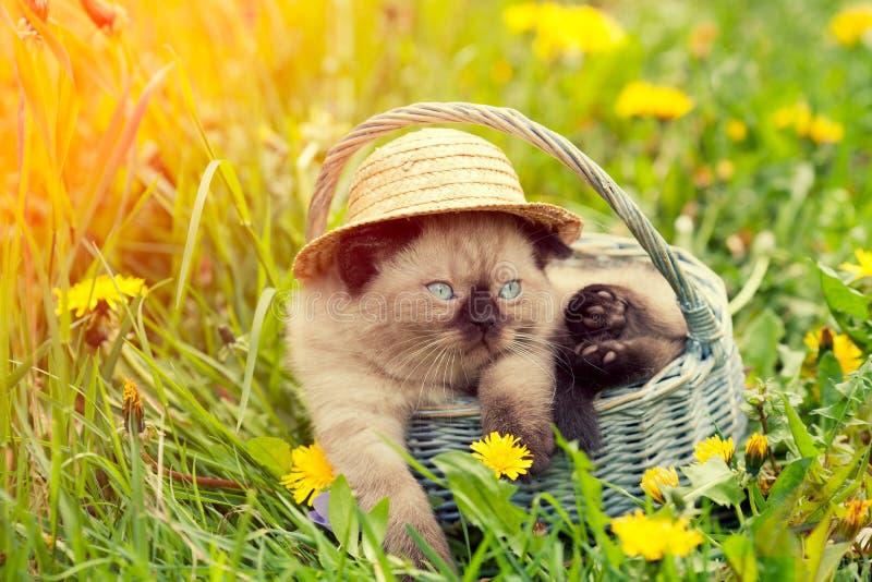 Katje die strohoed dragen, die in een mand zitten stock foto's