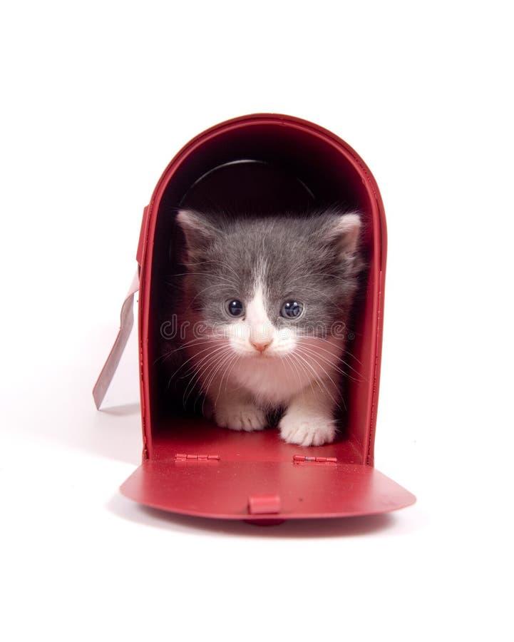 Katje in een brievenbus stock foto's