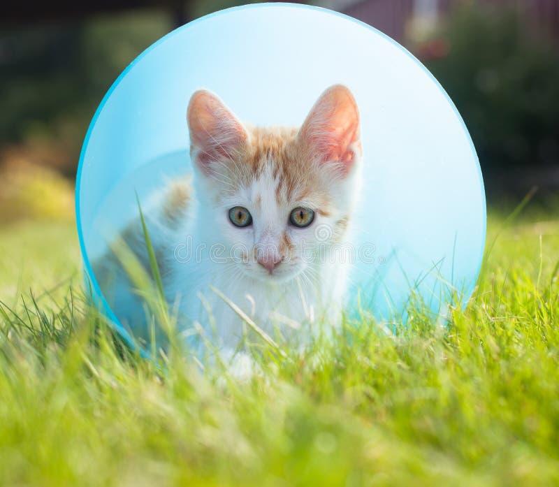 Katje in een emmer royalty-vrije stock fotografie