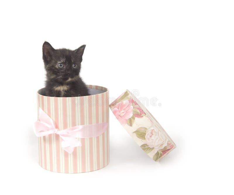Katje in een giftdoos stock afbeelding