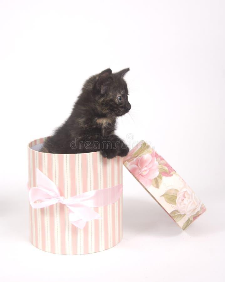 Katje in een giftdoos stock afbeeldingen