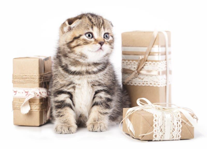 Katje in een huidige doos royalty-vrije stock afbeelding