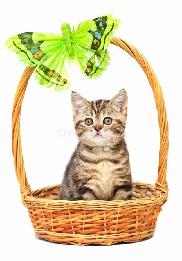 Katje in een mand stock afbeeldingen