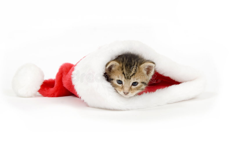 Katje in een santahoed royalty-vrije stock fotografie