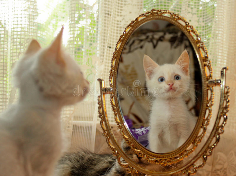 Katje en een spiegel stock foto's