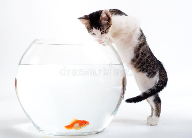Katje en goudvis royalty-vrije stock afbeelding